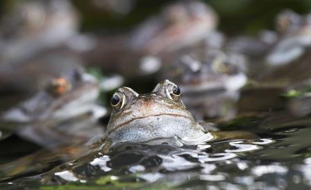 frog and spawn by Adrian Davey