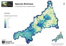 Butterfly species richness map